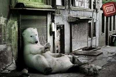 Les 10 publicités choc 2009 sur le réchauffement climatique